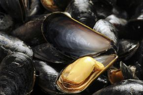 Mussels: They're tasty and handy for earthquake-proofing.