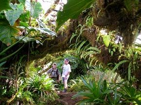 Two visitors enjoy the lush foliage surrounding the Ecolodge Rendez-Vous in Saba.