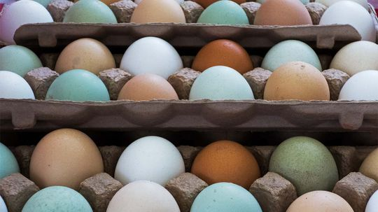 White, Brown, Green Chicken Eggs: What's the Difference?