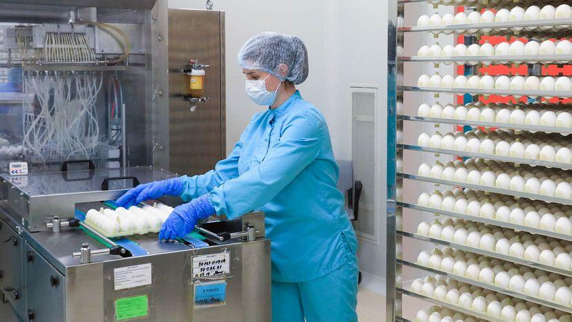 flu strains in eggs