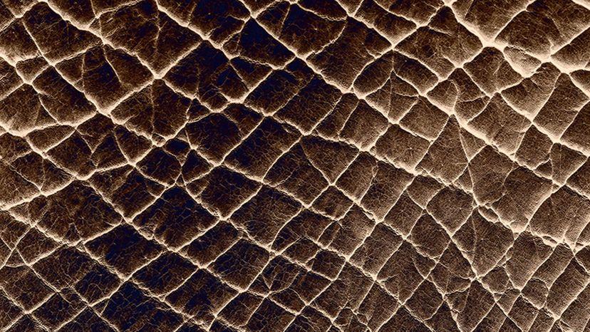 A closeup of an elephant's skin.