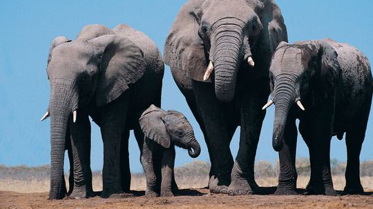 Scientists Figure Out Why Elephants' Skin Is So Cracked