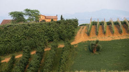 Ultimate Guide to the Emilia-Romagna Wine Region
