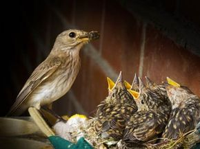 An empty nest can be lonely, but what if the nest ever empties at all?