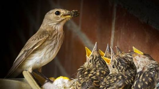 What is empty nest envy?
