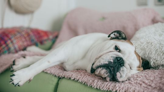 Embracing Ennui: How Boredom Can Be Good for You