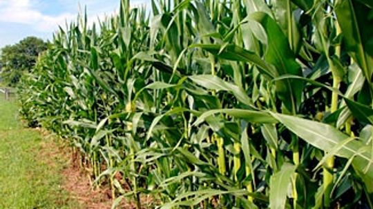 What are the environmental benefits of biofuels?