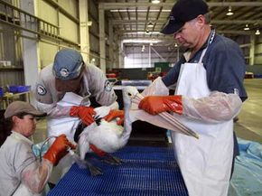 Many organizations are dedicated to making the world a greener place. And most of them need volunteers -- for example, these people are cleaning a bird after an oil spill.