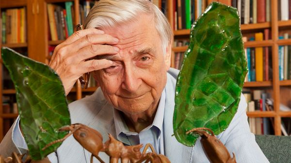 Why E.O. Wilson Is Called the 'Darwin of the 21st Century'