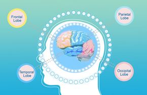 Frontal lobe epilepsy and temporal lobe epilepsy affect the parts of the brain indicated in the illustration.