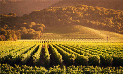 A trip to Napa Valley is of course lovely, but you may also find some vineyards in your own neck of the woods.