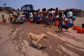 A dog walks past people gathered to buy water during a shortage in Villa El Salvador, a slum district of Lima, Peru.
