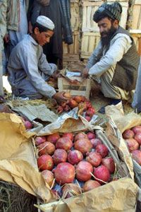These Pakistani fruit merchants sell their pomegranates locally. But selling goods over long distances usually requires payment in the form of credit.