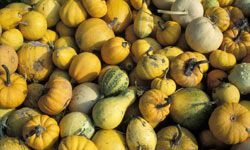 Love squash? Then, take your pick! You're going to get delicious flavor and great nutrition with almost any choice.