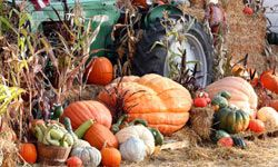 Of course, pumpkins and squash make the list, but you might be surprised from some of the other delicious foods in season during autumn.