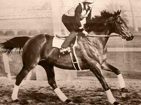 Famous Horses
