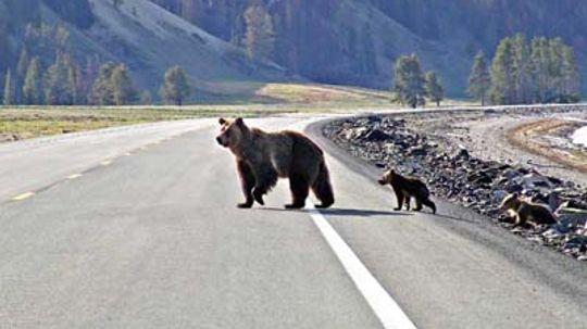Family Vacations in Wyoming