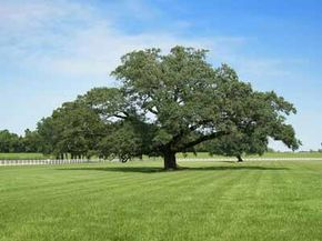 """Oak Alley Plantation has been called the """"Grande Dame of the Great River Road."""""""