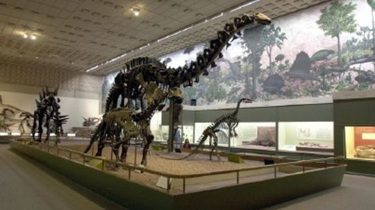 Family Vacations: Yale Peabody Museum of Natural History