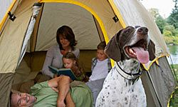 The family dog doesn't have to stay home; just make the proper preparations.