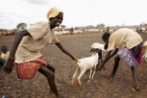 In 2006, a severe water crisis in Kenya meant some 2.5 million people were at risk of starvation. These two boys, from Dambas, Kenya, helped take special care of the few livestock that remained.