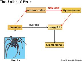 Creating fear is a process that takes place in the brain and is completely unconscious. Learn about the process of creating fear and the paths of fear.