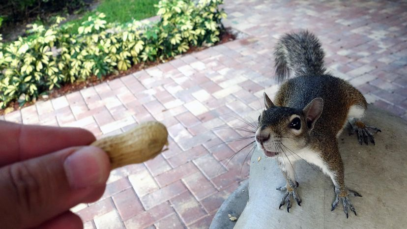 person feeding squirrel