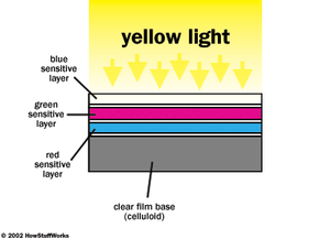This figure shows a magnified cross-section of a color negative film exposed to yellow light and then processed. In the additive system, yellow is red plus green. On the film, therefore, the red-sensitive and green-sensitive layers have formed cyan and magenta dyes, respectively.