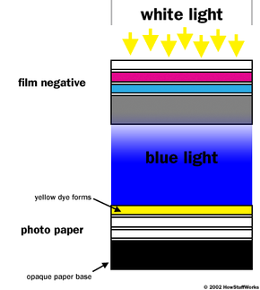 This figure shows a magnified cross-section of a color negative film exposed to white light and then processed. White light passes through the film to form blue light, which activates the blue-sensitive layer on the color print paper to create yellow dye.