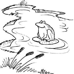 Pond Dip Net