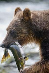 Um, no. Not quite like this. Works well enough for a bear, but in this article you'll strictly be learning about methods that won't have you putting a fish in your mouth until it's hot off the grill.