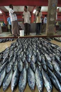 Nations like the Maldives rely heavily on a national fishing industry.