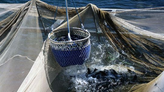 Cheap Magnets Could Keep Sharks Out of Fishing Nets