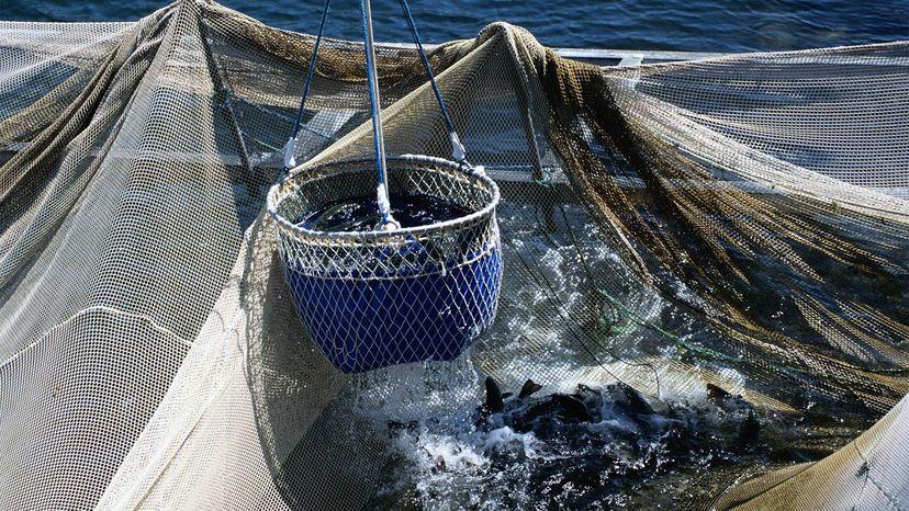 fishing nets, magnets