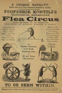 Advertisement for a flea circus circa 1900