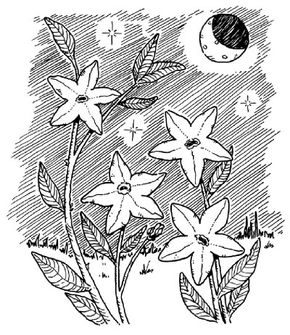 Find out which flowers bloom at night.