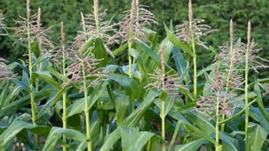 How Food Plots Work