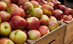 Apples can help prevent clogged arteries.