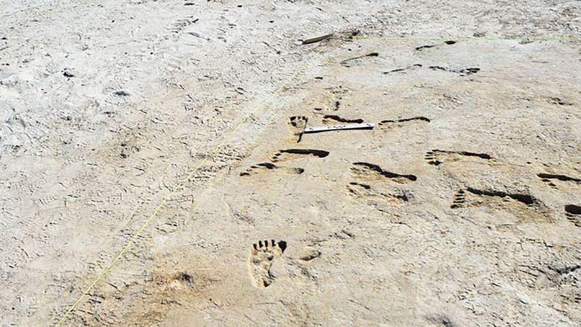 fossil footprints