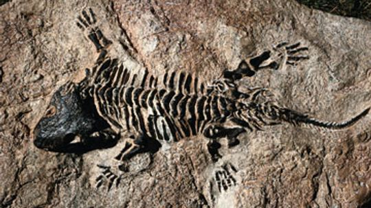 How incomplete is the fossil record?