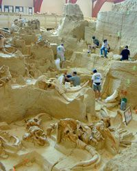 At The Mammoth Site, visitors are able to see mammoth bones that are still in situ in the Earth.