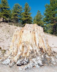 The Florissant Fossil Beds are home to the petrified remains of giant sequoia trees, including this one, the largest known as Big Stump.