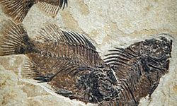 Fossil Butte, Wyo. is home to the largest deposit of freshwater fish fossils in the world. See more pictures of national parks.