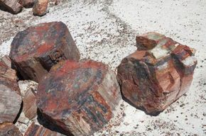 These pieces of petrified wood, found in Petrified Forest National Park, used to be trees. Now they're rocks -- good for paperweights but bad for paper. See more dinosaur pictures.
