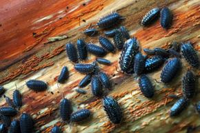 Just because you don''t find bugs in your home very often doesn''t mean they''re not swarming around its foundation.