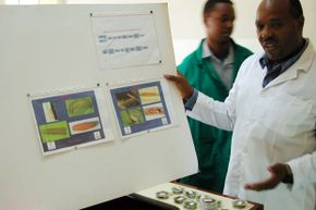 Dr. Stephen Mugo shows pictures of the stem borer, a pest that destroys entire corn harvests in Kenya. Mugo is one of many African scientists experimenting with bio-engineered food in order to grow heartier crops that will reduce hunger and malnutrition.