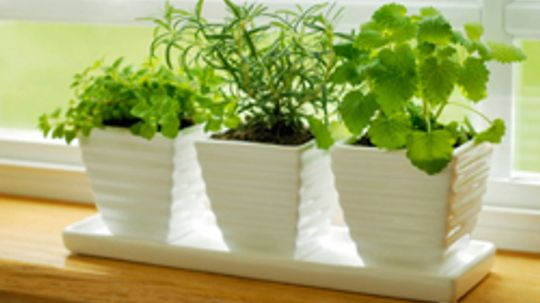 5 Tips for Saving Fresh Herbs
