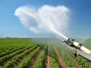 A water jet sprays onto fields of potatoes.