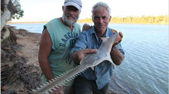 Freshwater Sawfish  River Monsters