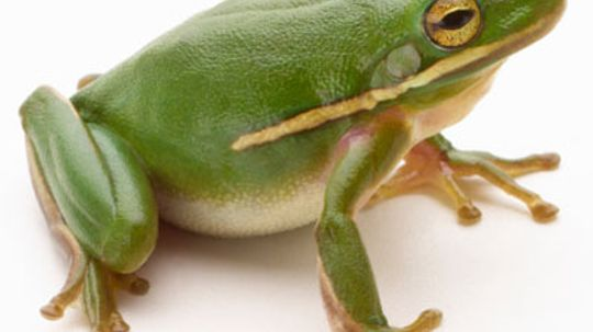 How Frogs Work